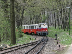 Train up through the woods
